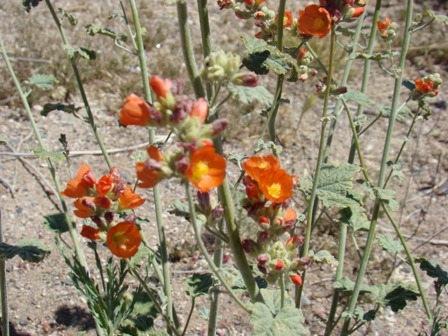 Red / Safron flowers found near