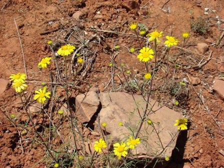 Yellow flowers indicating the                   presence of Guru